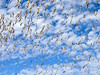 Galveston Beach ! (backup1940) Tags: sonydschx400v backup1940 gulls terns skimmers birds galvestonbeach galvestontexas texas seagulls