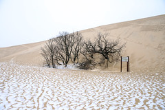 Between Sand & Snow (Clement Philippon) Tags: sand dune gironde neige