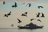 If.. (u c c r o w) Tags: ferry seagull gull seagulls bird birds fog foggy sky sea sail weather mediterraneansea mediterranean turkey turkish türkiye türkei uccrow silhouette istanbul