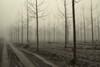 strade di sabbia (mat56.) Tags: paesaggi paesaggio landscapes landscape alberi trees nebbia fog misty pioppi poplars legabbiane chignolopo pavia pavese monocromo monochrome road strada pianura padana lombardia autunno autumn sabbia sand antonio romei mat56