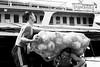 Struggling Under a Heavy Load (anthonypond) Tags: yangon 50mmsummilux leicam10 myanmar wharf bw burma