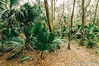 St. Francis Trail (J. Parker Natural Florida Photographer) Tags: stfrancistrail lakecounty trail forest jungle path outdoor landscape cloudy overcast color green trees woods wild wilderness scenic naturalbeauty vsco vscofilm florida centralflorida