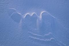 Neige 1 (Patrice StG) Tags: neige snow hiver québec winter gimp darktable pentax pentaxart ks2