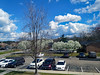 Parking Lot And Sky. (dccradio) Tags: lumberton nc northcarolina robesoncounty outdoors outside tree trees nature natural peartree decorative decorativepeartree branches treebranches branch stick sticks treelimbs treelimb blossoms bloom flower floral flowers floweringtree flowering canon powershot elph 520hs sky bluesky clouds whiteclouds afternoon sunday sundayafternoon parking parkinglot pavement car suv truck aerial