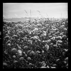 Above the beach (vincent-photo) Tags: caffenolch yashica yashica12 yashicaffenol caffenol 120 mediumformat square blackwhite film analog tlr 6x6