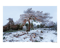 (david Ramalleira) Tags: davidramalleiraphotography davidramalleira d700 nikon landscape landscapes tree trees nature naturaleza natureart naturephotography naturesfinest naturesart nieve natura winter invierno