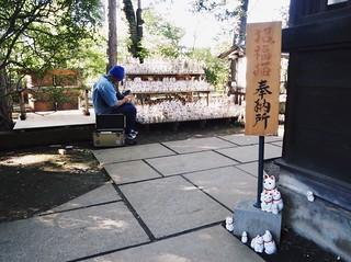 Lucky cats 招き猫たち (TOKYO JAPAN)