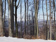 erdő télen / forest in winter (debreczeniemoke) Tags: tél winter hó snow hegy mountains erdő forest fa tree tájkép landscape morgó nagybánya baiamare olympusem5