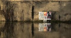 Arthur H. et la crue. (LACPIXEL) Tags: seine river fleuve rio crue rise crecida arthurh affiche poster cartel reflet reflection reflejo mur wall pared miroir espejo mirror couleurs colours colores sony ilce7rm3 street streetphotographer flickr lacpixel yvelines france météo