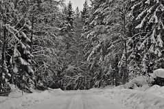 Snow (Stefano Rugolo) Tags: stefanorugolo pentax k5 pentaxk5 smcpentaxm100mmf28 ricohimaging snow road landscape forest winter tree hälsingland sweden sverige monochrome blackandwhite wood sky