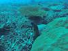 Moraine (Peter_069) Tags: tauchen diving scuba malediven maldives äqypten egypt wasser water underwater unterwasser padi fische fisch fish shellfish muscheln moräne moränen moraine batfish fledermausfisch koralle korallen coral nemo clownfisch clownfish boot boat vessel blaueswasser bluewater