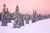 Un petit morceau d'hiver (prenzlauerberg) Tags: 2018 paysage sapin neige 1835 nikon suisse vaud romandie ciel arbre forêt raquettes