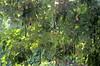 IMG_8299 (mohandep) Tags: pondicherry friends kavya travel india cities flowers plants trees landmarks signs humour