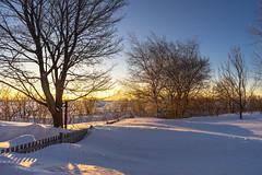 Super-Takumar 24mm f/3.5 + Sony A7II (Tasmanian58) Tags: tree supertakumar 24mm oldlens sony a7ii home winter snow sunrise field landscape light sun sky