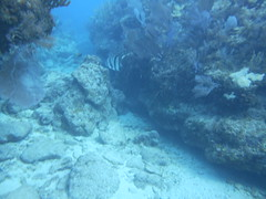 Marvelous Molasses Reef Scuba Key Largo Morning Magic (Sail Fish Scuba) Tags: keylargo molassesreef southfloridadiving floridakeys scubakeylargo padi turtle shark snorkelingwithsharks