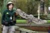 Spotted Eagle-Owl and Handler (Bri_J) Tags: tropicalbutterflyhouse northanston southyorkshire uk butterflyhouse yorkshire zoo nikon d7200 spottedeagleowl eagleowl owl bird birdofprey buboafricanus sigma150600mm