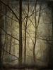 BROUILLARD NO 1 (pierre.arnoldi) Tags: montsainthilaire québec canada pierrearnoldi photooriginale photographequébécois photocouleur iphone6s brouillard hiver on1photoraw2018 phototexturée