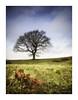 My New Favourite Tree (ben_wtrs79) Tags: lone tree hanpton lucy warwickshire winter olympus 1240pro omd em1