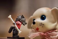 Keep wishing, Buddy-boy! (Hannhell) Tags: toysunday wishing japan lego dog wolf bone