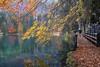 Autumn walk (Silva Predalič) Tags: lake italy lagi di fusine lagidifusine autumn walk man colors reflections wood water tree