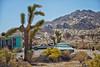 Club Ed (Maureen Bond) Tags: coldbeer cars auotmobiles vintage classic desert joshuatrees rocks mountains brush ca maureenbond butte