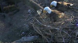 DC Eagle nest, 5:05 pm