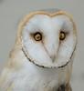 Owl (Stuck in Customs) Tags: tokyo japan treyratcliff stuckincustoms stuckincustomscom owl portrait 80stays bird eyes feathers animal macro sonya7r3 sony sonyilce7rm3