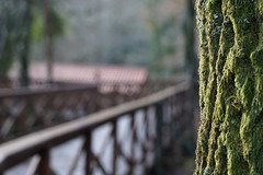 Bokeh naturaleza. (Moordenaar) Tags: ilce6000 naturaleza a6000 arboles paseo muiño molino madera verde musgo canonfd50mm18 canonfd50mm fdvintage vintage lluvia diego 50mm galicia españa gabenlle laracha bokeh desenfoque