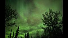 Shimmer and Flicker (Katy on the Tundra) Tags: northernlights aurora auroraborealis alaska nightsky night astronomy