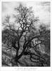 Tree, Winter Light (G Dan Mitchell) Tags: california hills tule fog clearing bare winter tree oak silhouette clouds light blackandwhite monochrome calero hillssantaclaracounty park usa north america landscape nature