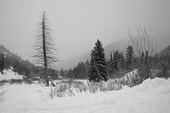 Big Cottonwood Snow (claeshields) Tags: winter snow cold forest trees pines weather utah bw blackwhite storm stormy