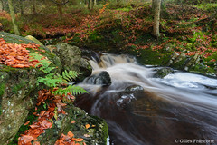 Waterfall behind the rock (gillesfrancotte) Tags: 2017 ardennes autumn cantonsdelest d800 eastbelgium hoëgne jalhay nikon november outdoor automne cascade creek eau fall landscape longexposure nature novembre river stream torrent water waterfall waterscape wallonie belgique be rock fern fougère leaves