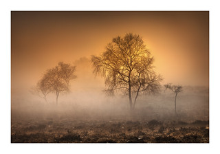 Birchen Mist