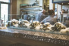 42.365.2018 Oxbow Market oysters (Kris McNeil) Tags: oxbow market napa sonoma oysters ice fresh farmers