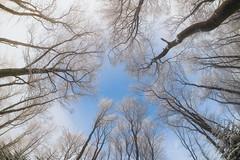 Blue Eye (stephan_amm) Tags: blau blue himmel sky sun beech buchen buche raureif hoarfrost winter fisheye franconia oberfranken franken frankenwald