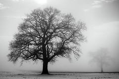 La doublure (photofabulation) Tags: arbre tree brume mist fog brouillard nb bw champs fields neige snow romandie suisse switzerland europe europa