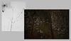 winter in the bog (bunchadogs & susan [off-ish]) Tags: winter bog lumenprint digital holgalens fortunacalifornia