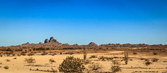 Picacho Peak (http://fineartamerica.com/profiles/robert-bales.ht) Tags: arizona califorina desert facebook fineart flickr haybales landscape people photo photouploads places states valleyofnames valleyofthenames usa cactus saguaro nature cholla west park clouds sky picachopeakstatepark plant state outdoors rocks peak picacho scenic southwest western saguarocactus beauty travel tourism mountains gold ecosystem mexican sonoran wilderness vegetation peaks cliff horizontal desertvegetation ocotillo picachomountains mountain sonora picachopeak sonorandesert landforms america desertplants desertgold publicland robertbales