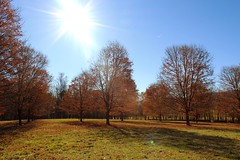 (the april fool) Tags: outdoors autumn newyork stormking artcenter sculptures landscape