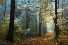 Tales from the forest of the hidden treasures (Rita Eberle-Wessner) Tags: wald forest woods nebel fog waldweg forestpath foresttrail trees bäume laub leaves laubwald pfad path tales fairytale fairyaleforest snow schnee neuschnee wintereinbruch odenwald zauberwald märchenwald twb