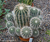 Cacti (jimgspokane) Tags: plants cactus geiserconservatory manitopark spokanewashingtonstate excapture
