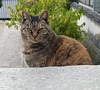 "Onomichi-008 (photozaki) Tags: ""dogs cats"" dog dogs inu cat cats neko shikoku japan ohenro88 ohenro pilgrimage"