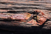 "Petrified forest national park, Arizona (sensaos) Tags: united states america 2014 travel sensaos arizona usa ""petrifiedforestnationalpark""petrifiedforestnationalparkunitedstatesnationalparknavajoapachenortheasternarizona""petifiedwoodpetrifiedwood ""petrified forest national park"" petrified park navajo apache northeastern wood steppe badlands holbrook ""national monument"" wood"""