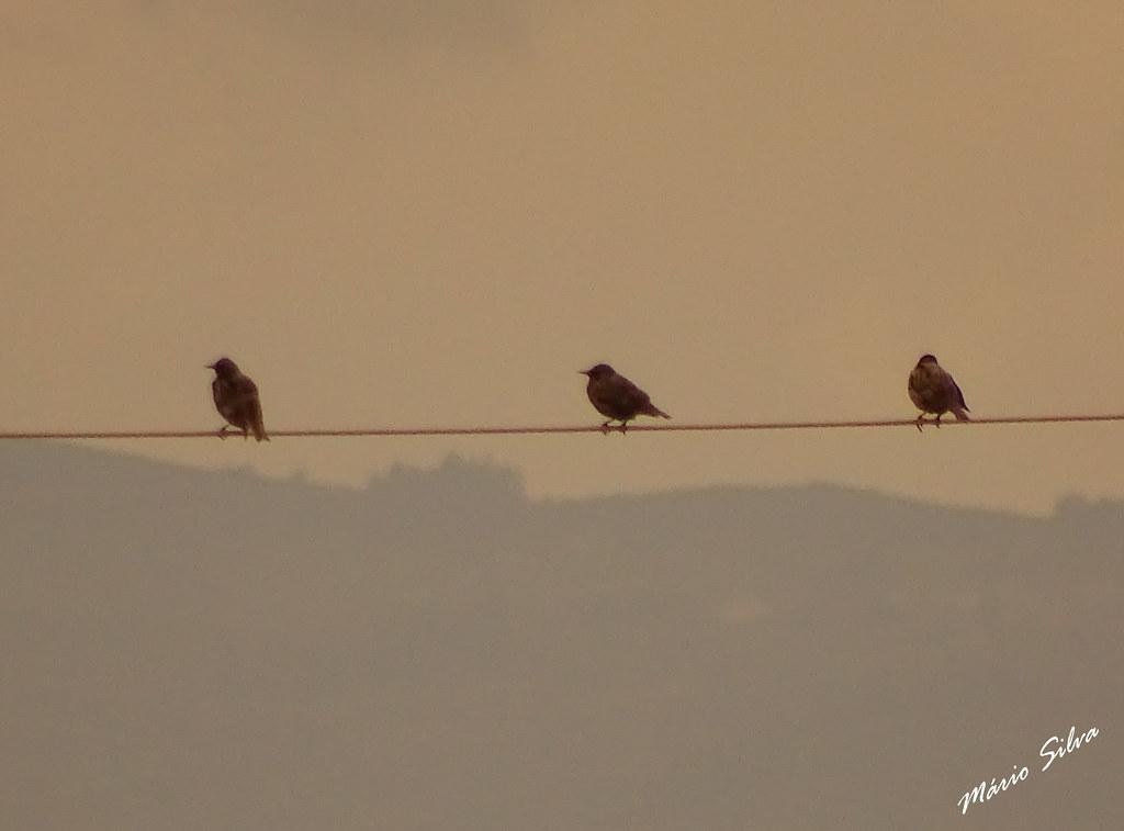 Águas Frias (Chaves) - ... pássaros descansando ...
