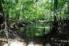 morbid memory loss (roadkill rabbit) Tags: swamp woods trees vines florida