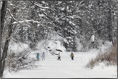 A great day for a walk down the creek. (geelog) Tags: alberta bowriver calgary fishcreekprovincialpark hullswoods sikomelake bebogrove lafargemeadows shannonterrace ab canada