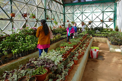 Ooty Botanic Garden P1250527 (Phil @ Delfryn Design) Tags: india2018 ooty