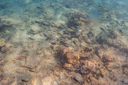 Underwater in Gili Air