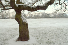 Snowy tree in Ashton Park (Tony Worrall) Tags: preston lancs lancashire city england regional region area northern uk update place location north visit county attraction open stream tour country welovethenorth nw northwest britain english british gb capture buy stock sell sale outside outdoors caught photo shoot shot picture captured ashtononribble ashton ashtonpark park white winter freeze cold chilly weather beast snow snowy snowfall ice icy colder seasonal