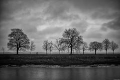 Le chemin des vieux amis (Mathieu HENON) Tags: leica m240 noctilux 50mm noirblanc nb blackwhite monochrome france saintvalerysursomme picardie baie de somme paysage hiver arbres chemin